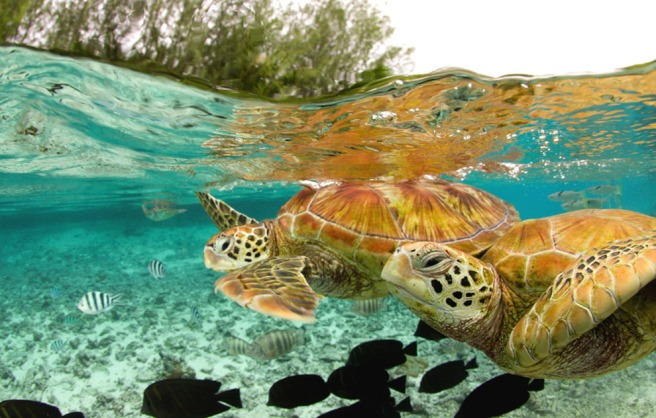 sea turtles bora bora world_animal_day
